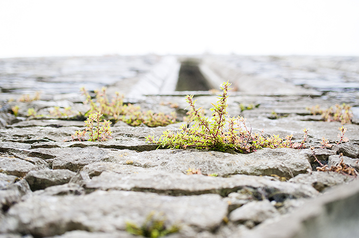 Ireland | Ely Fair Photography |