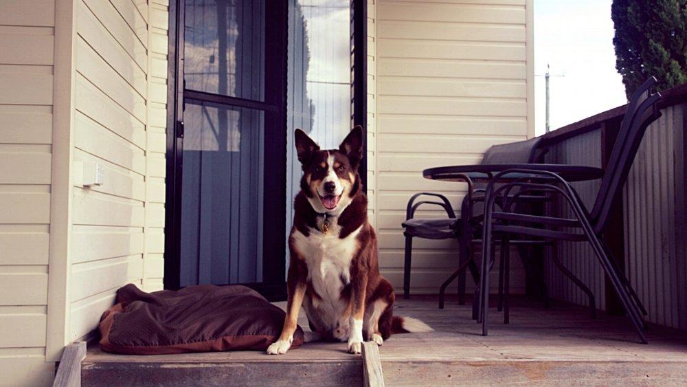 pet friendly park accommodation