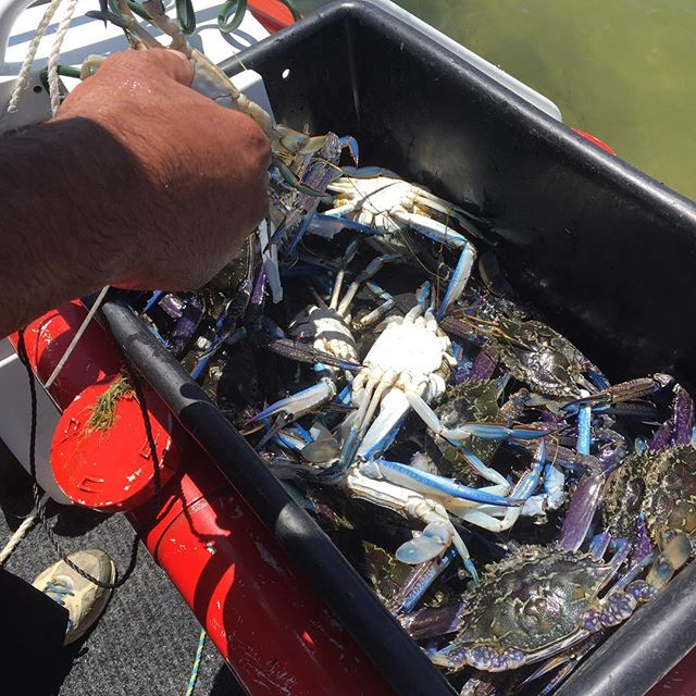 The weather is beautiful ☀️ and the crabs 🦀 are about. Twin Waters Caravan Park is the place to be.  #sunshine #camping #livingmybestlife #family #friends #memories #crab #fishing #boating #visitpeel #mymandurah #caravan #dinner #petfriendly