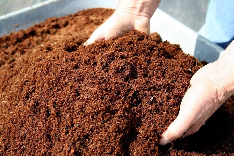 loosecocopeat.jpg