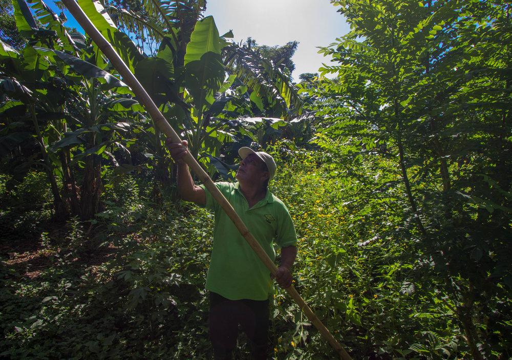 Mango Farm Shot-2.jpg