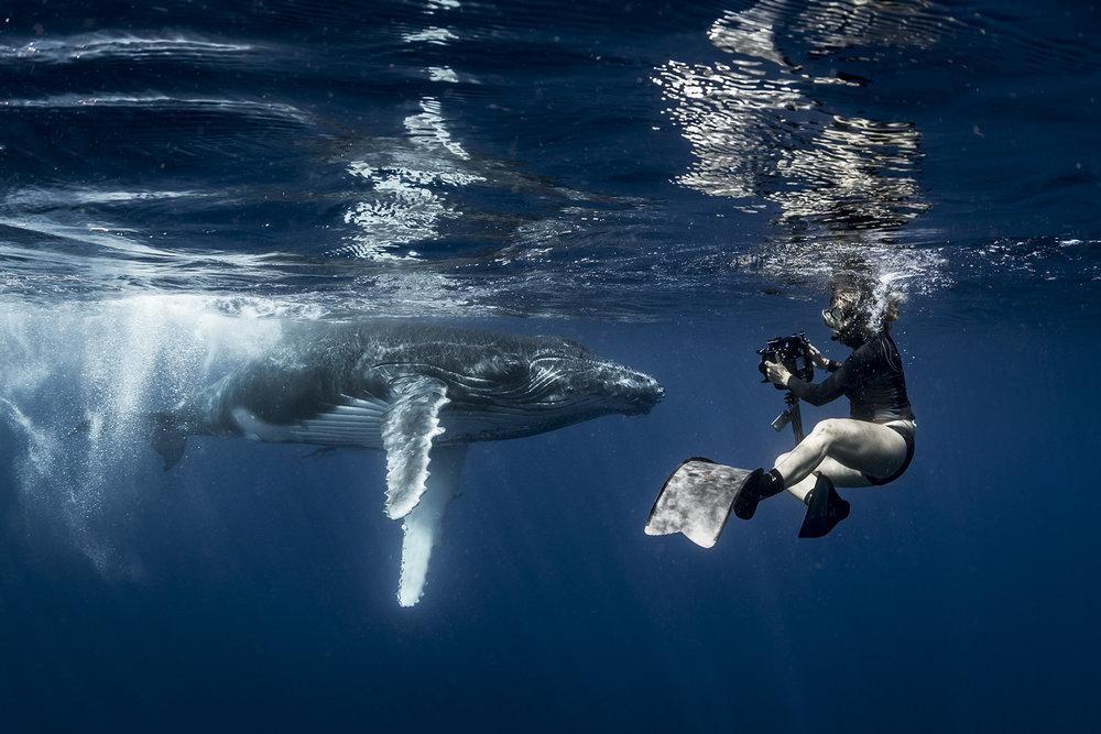 Annie Crawley Baby Humpback Whale SRWX1825-Edit_WEB.jpg