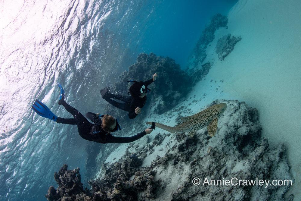 Tonga Humpback Whales Annie Crawley-9843.jpg