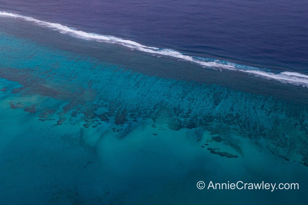 Tonga Humpback Whales Annie Crawley-9640.jpg