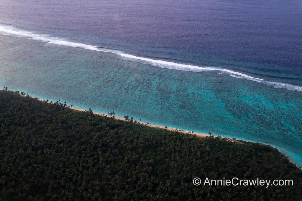 Tonga Humpback Whales Annie Crawley-9653.jpg