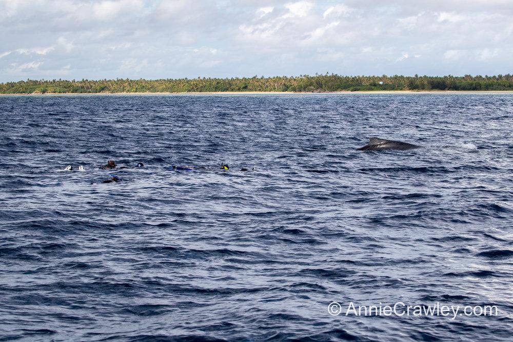 Tonga Humpback Whales Annie Crawley-9912.jpg