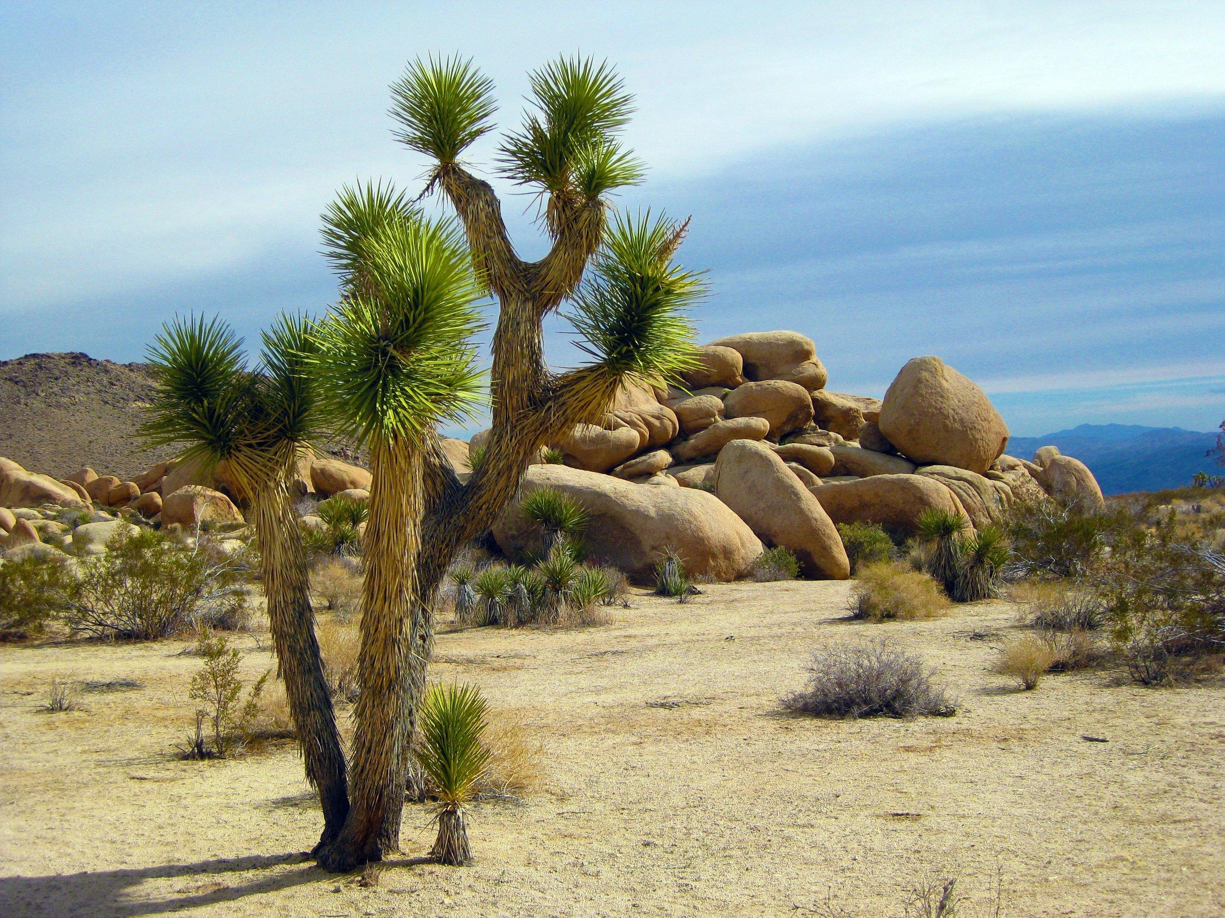 america-arid-bushes-221148