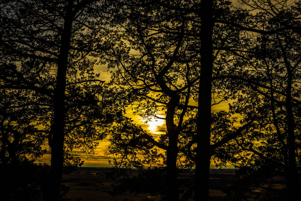 wisconsin-yellow-dusk-through-the-trees-gibraltar-rock-free-stock-photo.jpg