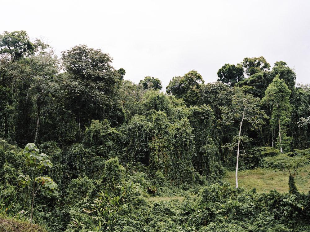 treeforest.jpg