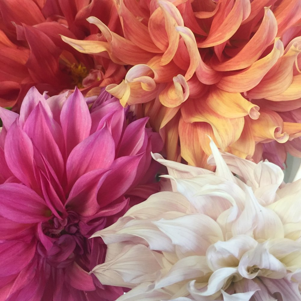 FLOWERS - Flowers bring joy to our life and our farm. We focus on perennials including roses, dahlias and peonies and so many more