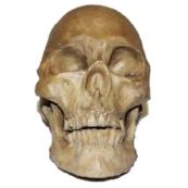 rotting-skull__50839__94119_1522766155.jpg