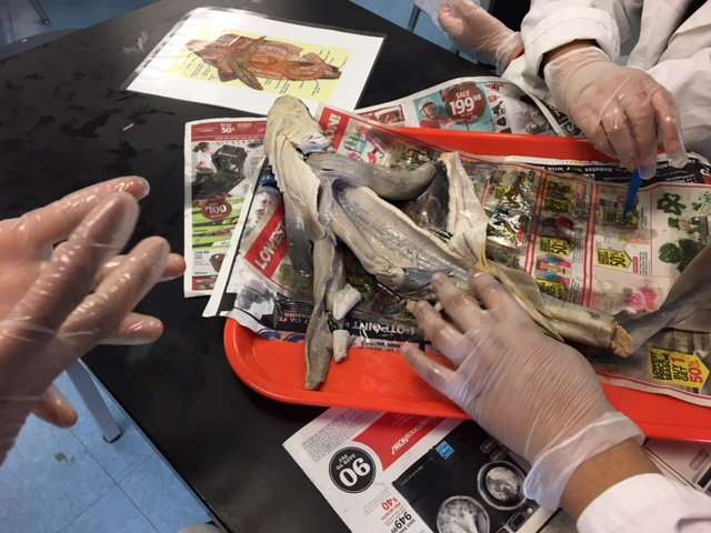 Students dissecting a shark
