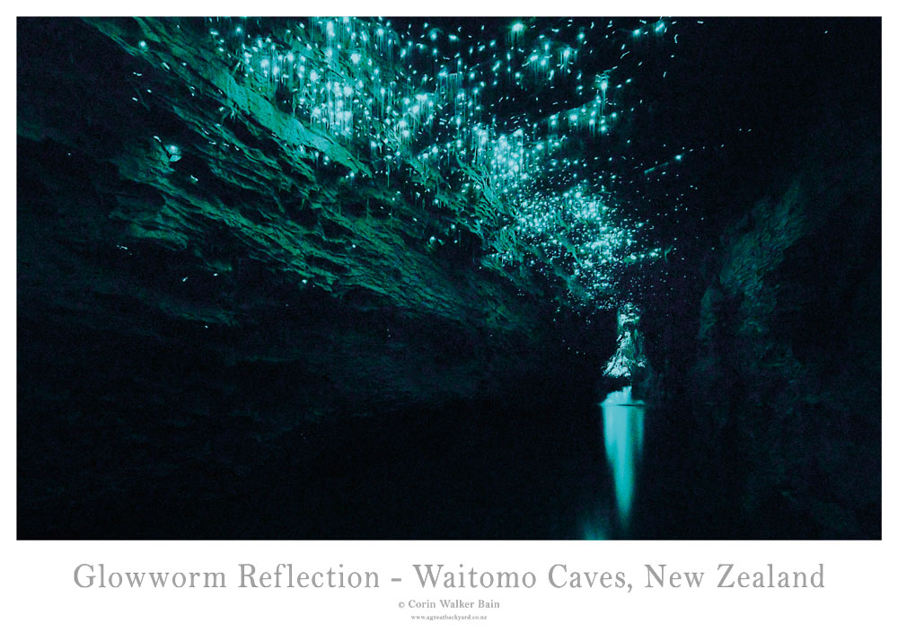 Glowworm-Reflection-Poster.jpg