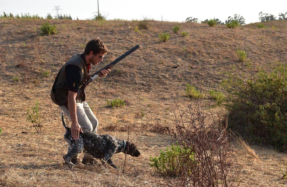 Caçadas de Salto - Disfrute de um dia excelente de caça com cão de parar.