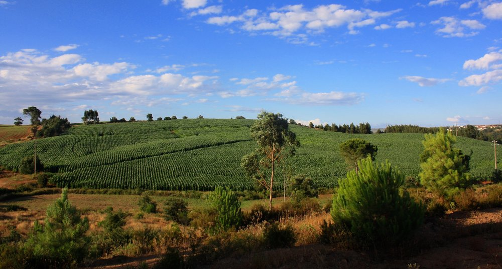 SOBRE NÓS-foto agricultura2.jpg
