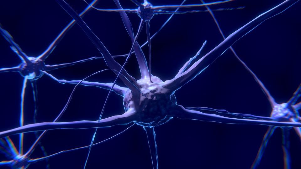 nerve-cell-2213009_960_720.jpg
