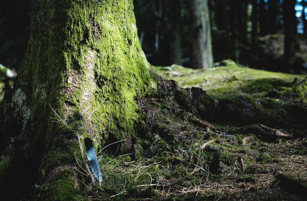 - Skötsel- och bevarandeplan