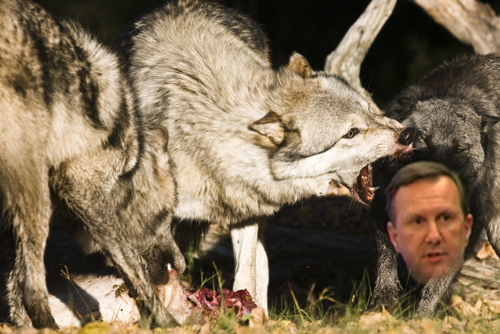 Pack of Savage Wolves Thrashes Infamous Online Marketer