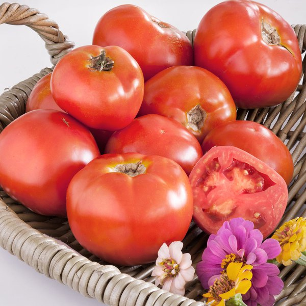Marion Heirloom Tomato - Marion is open-pollinated and well adapted to the South. A Rutgers type,  but earlier and more disease-resistant. Indeterminate vines bear  smooth, deep-globed, and crack resistant fruit all season. High yielding  and vigorous, so be sure to stake or cage. A great slicing tomato.  Resistant to fusarium wilt (F) and gray leaf spot (St).