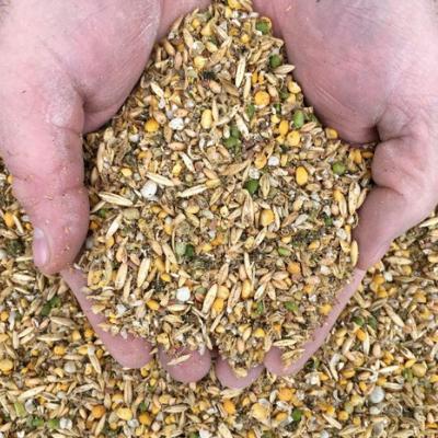 Corn Free Layer Feed