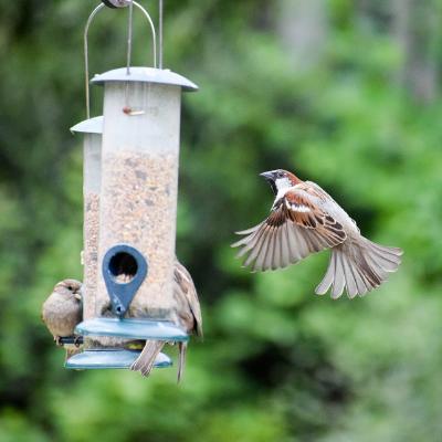 Wild Birds -