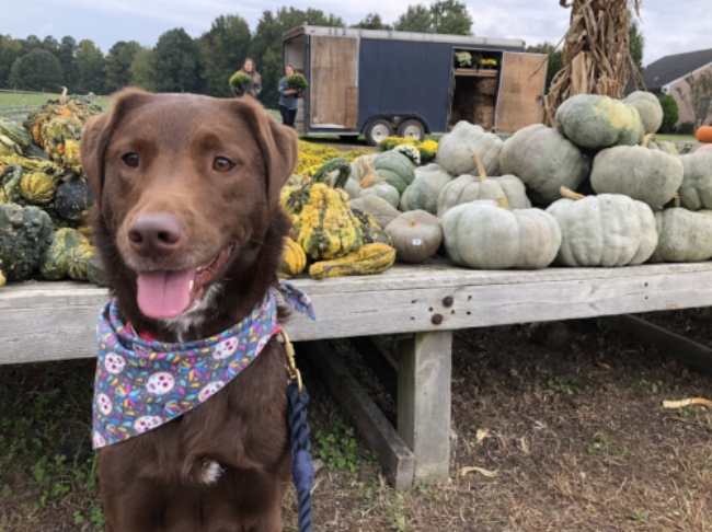 Pumpkin Patch Vibes. Mako had such a blast picking out her pumpkins and mom's decor!