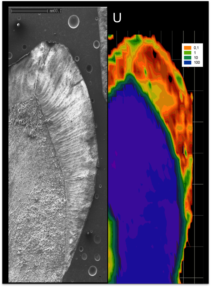 Mapping of a Neanderthal Child tooth using LA-ICPMS - (credit R. Joannes-Boyau)