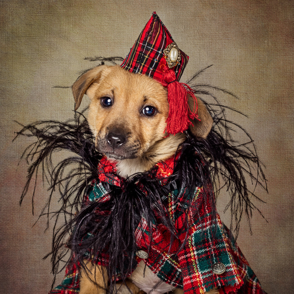 Anthony Rubio, Dog Fashion, Pet Fashion, Dog Model, Pet Couturier, Canine Couture, Gowns For Dogs, Clothing for dogs,Scotty.jpg