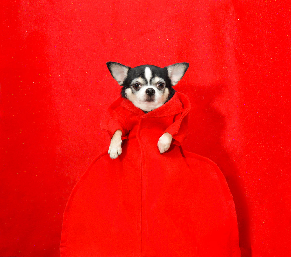 Anthony Rubio, 2017 Met Gala, Rei Kawakubo Inspiration, Dog Fashion, Comme Des Garcons,  DSC_3398 NEW 600.jpg