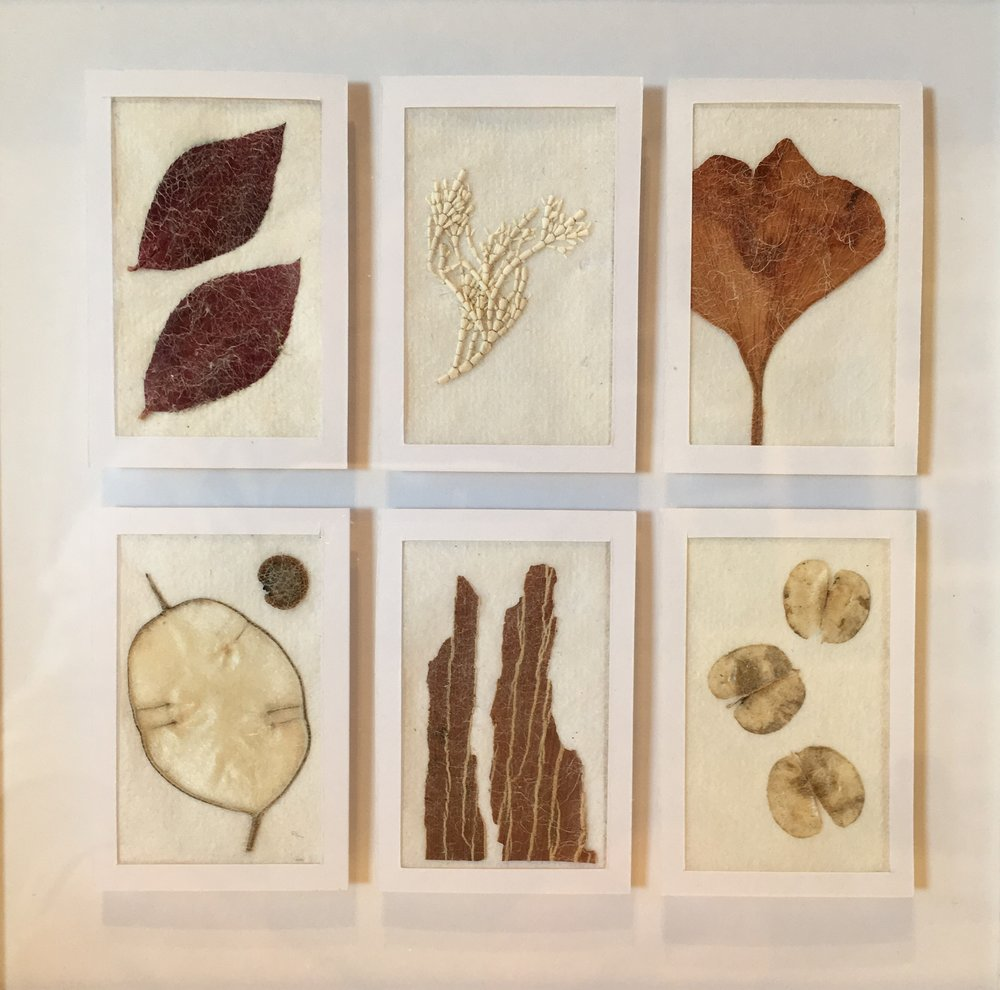 seeds & leaves panel picture.jpg
