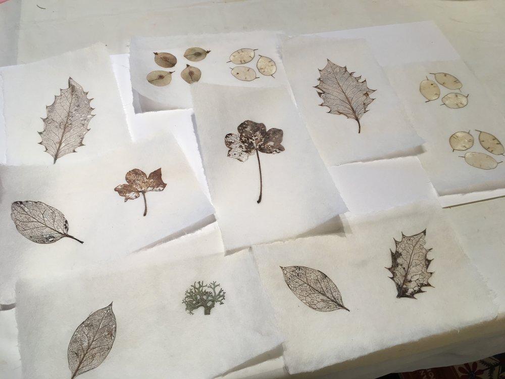 skeleton leaf papers.JPG