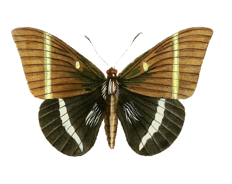 single moth.jpg