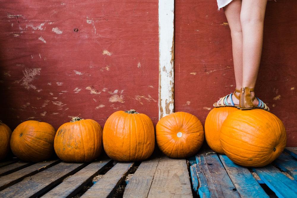 pumpkin-charlotte-3.jpeg