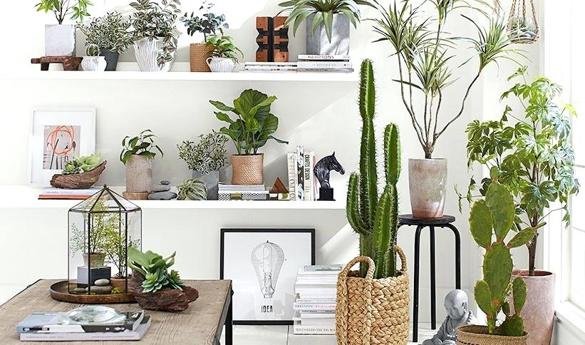 7-indoor-plant-ideas-to-bring-outside-in-best-dark-room.jpg