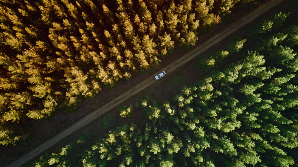 Belanglo State Forest - George Suresh.jpg
