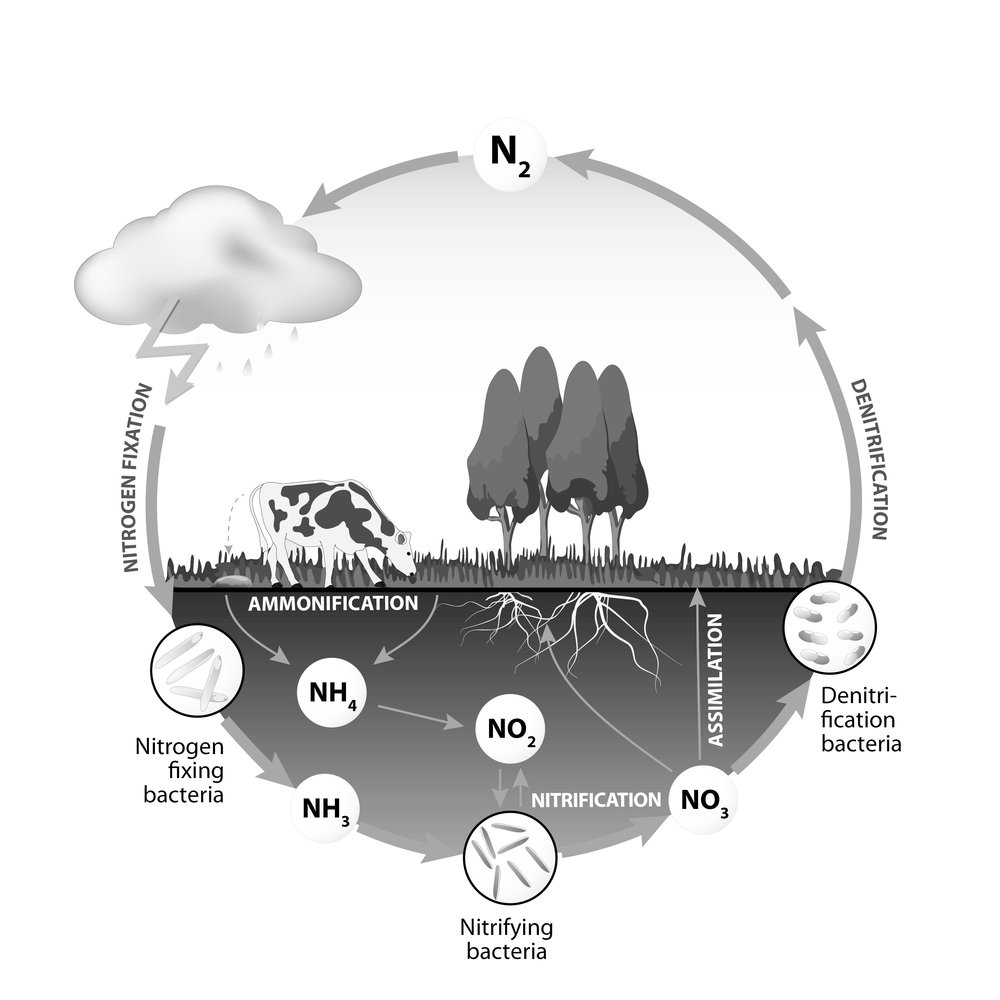 Nitrogen Cycle - There's no waste in nature, only efficient systems like the Nitrogen Cycle.