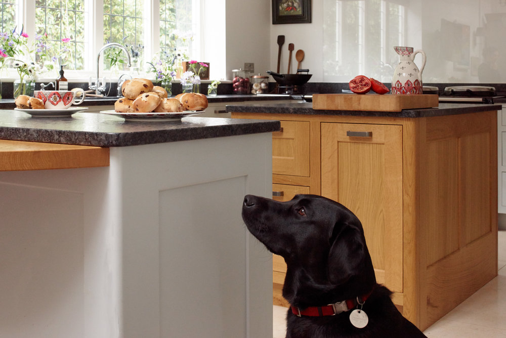 Lights, Larders and Labradors -