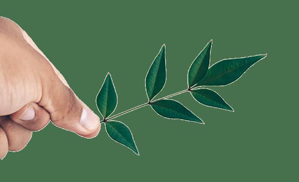 premium_tea_leaves_side_alt.png