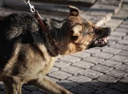 DOG BITES  Thousands of individuals sustain dog bites each year. Our attorneys can hold dog owners liable for your injuries and collect due compensation.