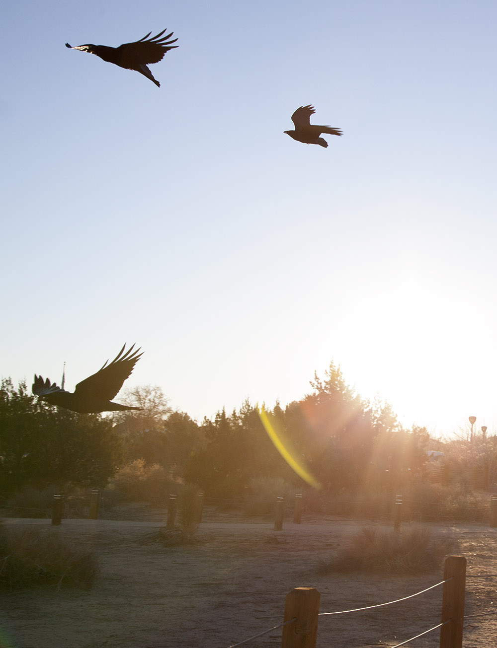 Birds soared in the air above the preserve.