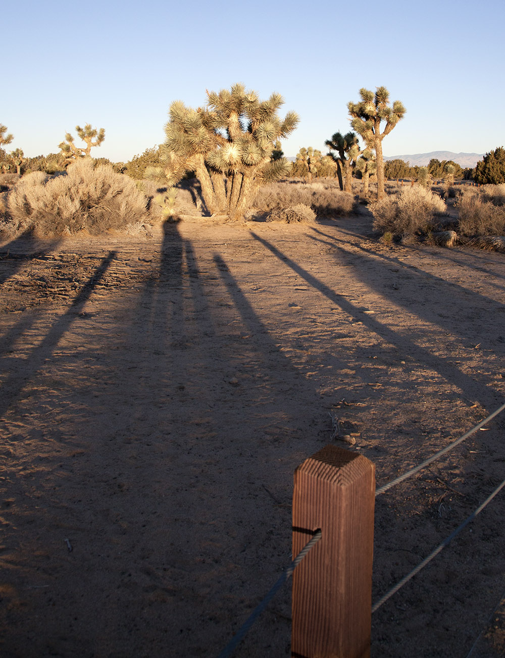 As the sun came up, the shadows stretched across the desert preserve, capturing me in the act of recording the beauty.