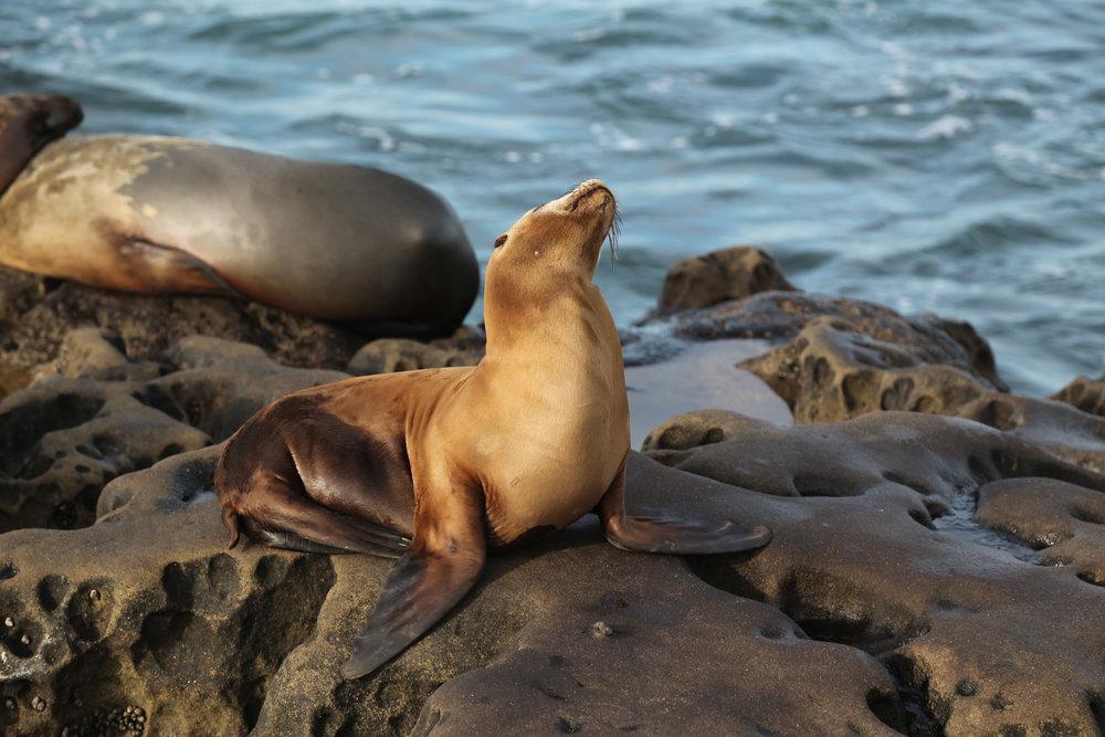 proud seal.jpg