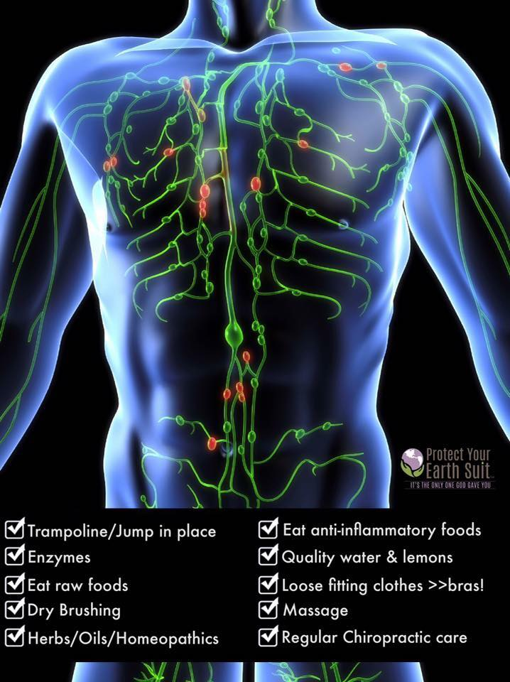 The Lymphatic System.jpg