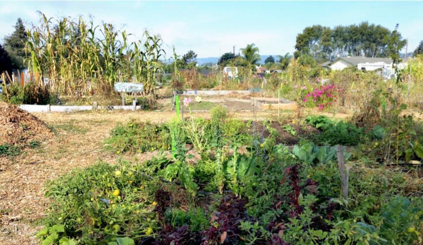 "Garden plots at the ""Rainbow"" Community Garden in Live Oak"