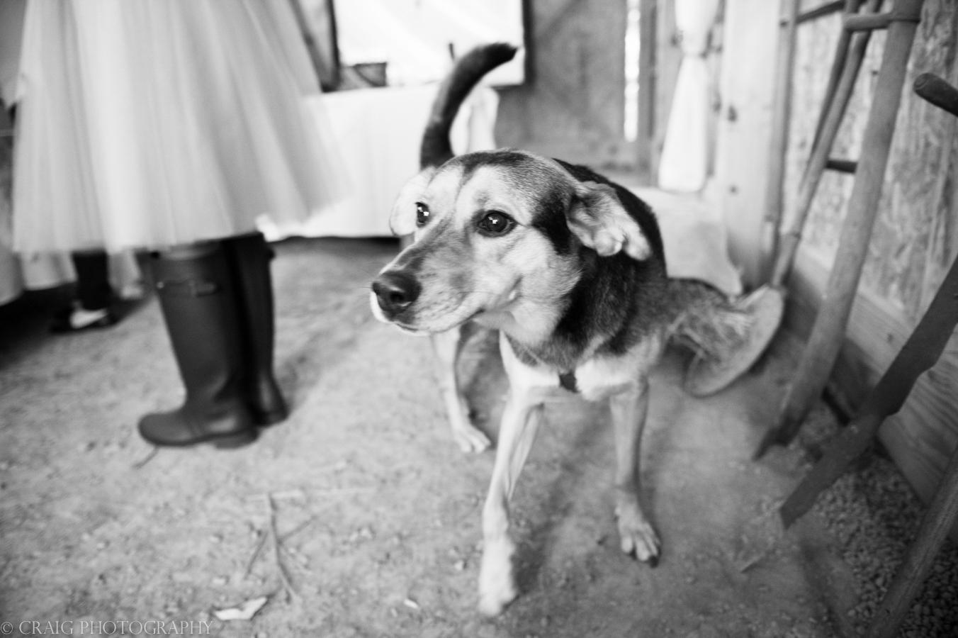 Churchview Farms Weddings Pittsburgh-0177