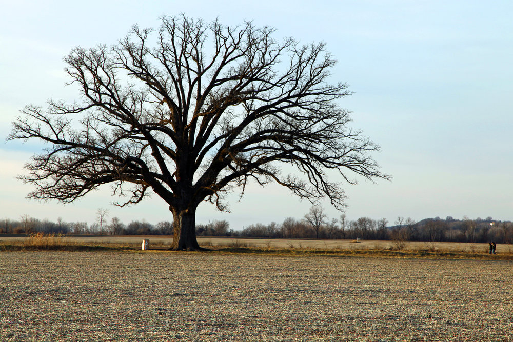 """   Two girls at Bur Oak Tree McBaine   "" by    Graham Higgs    is licensed under    CC BY 2.0"