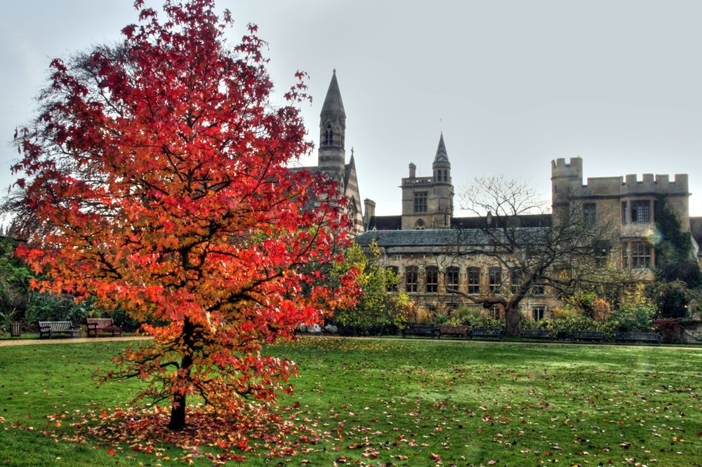 """   Liquidambar in Balliol's Garden Quad   "" by    Piers Nye    is licensed under    CC BY 2.0"