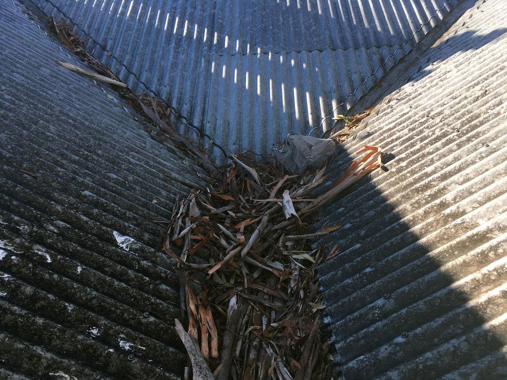 roof-IMG_2673.jpg