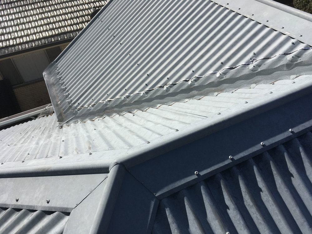 roof-IMG_2671.jpg