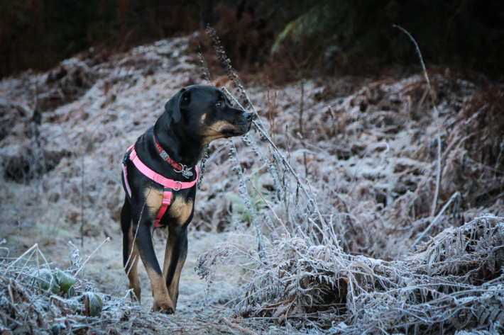 Talitha on a Frosty Trail | Squamish | This Pilgrim's Progress | Lorraine Yeung